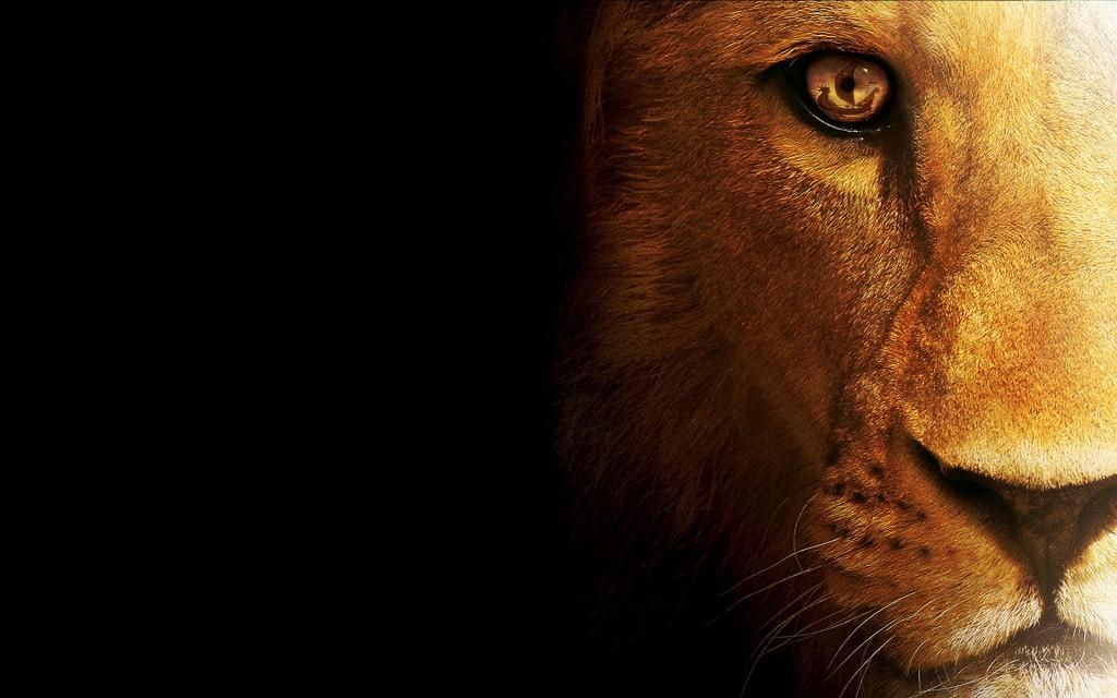 Leijonakuningas wallpaper8