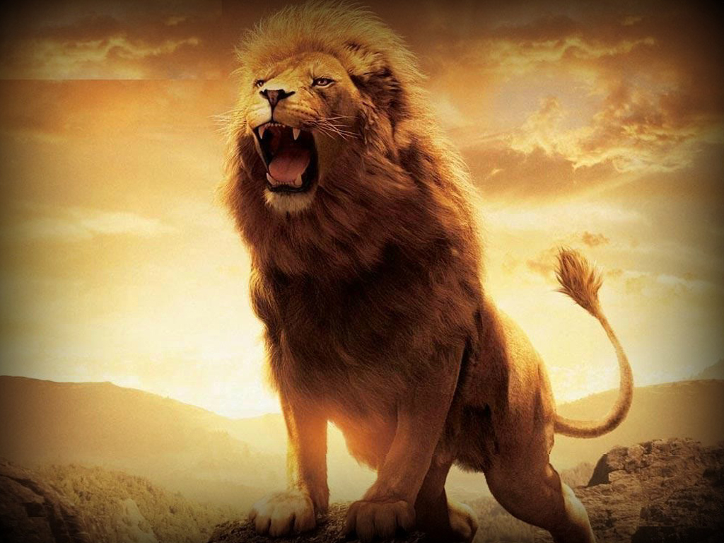 lion king wallpaper9