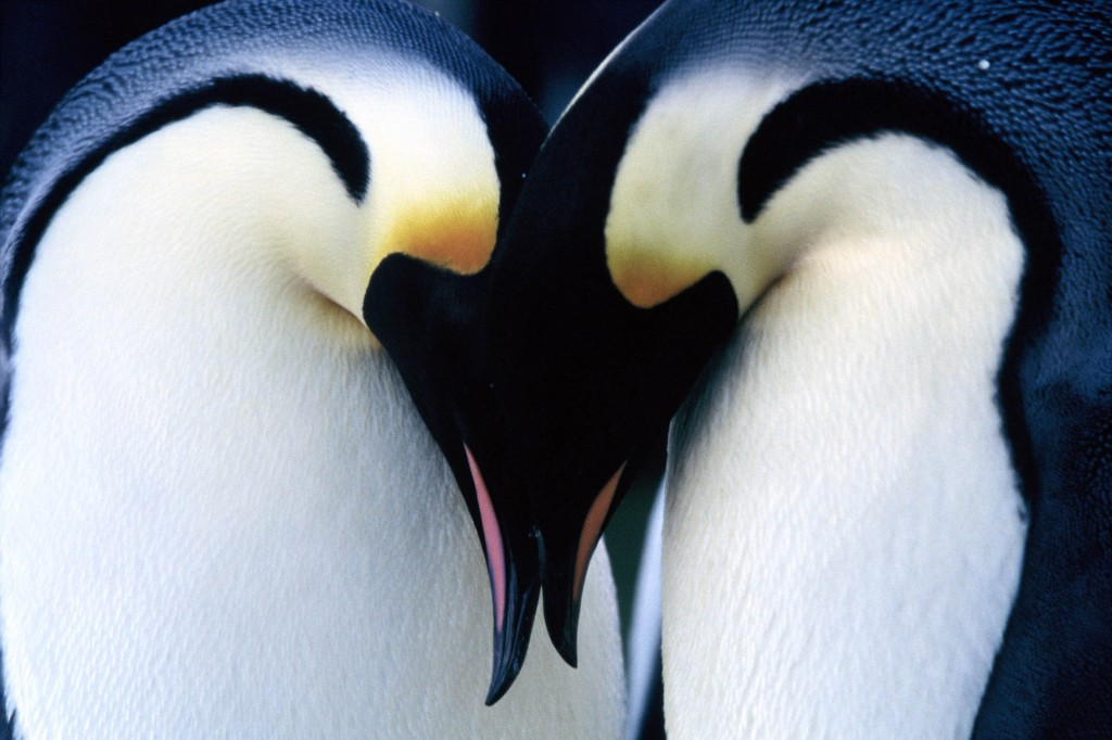penguin-wallpaper9-1024x682