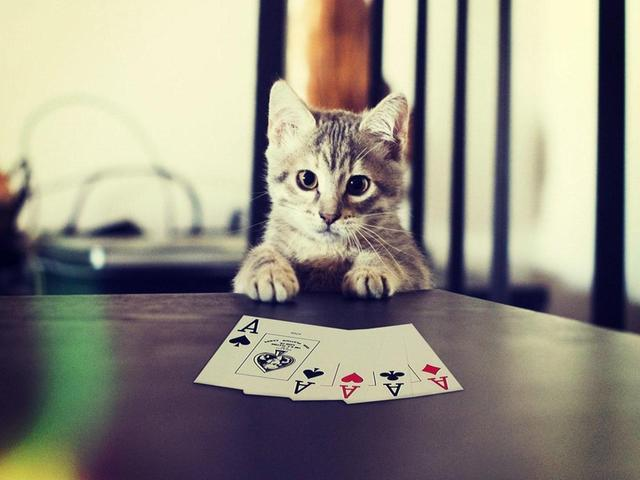 poker wallpaper13