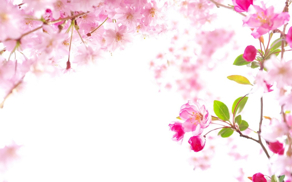 sakura-wallpaper4-1024x640