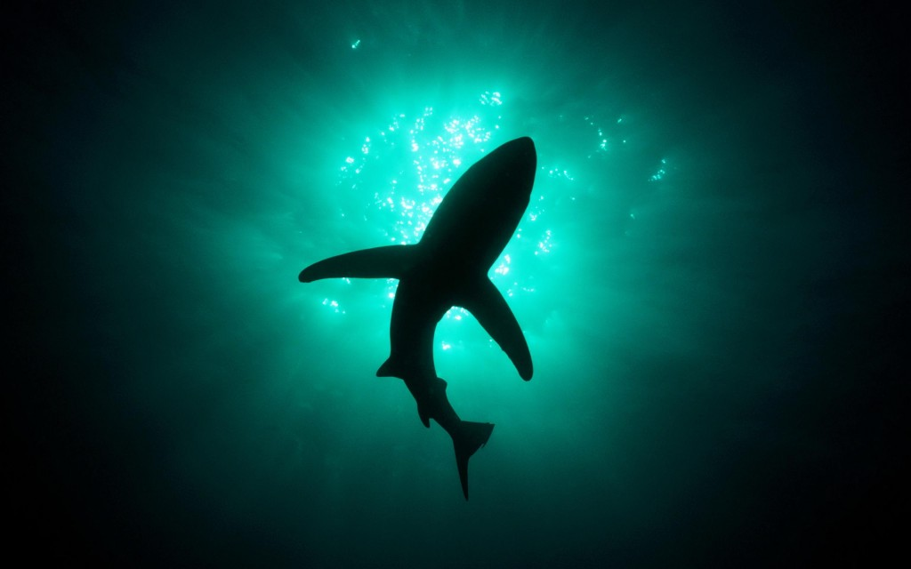 shark-wallpaper-5-1024x640