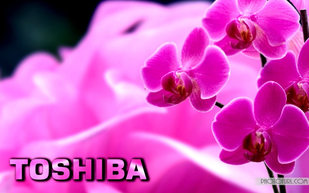 toshiba-wallpaper8