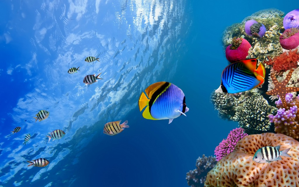 underwater wallpaper3