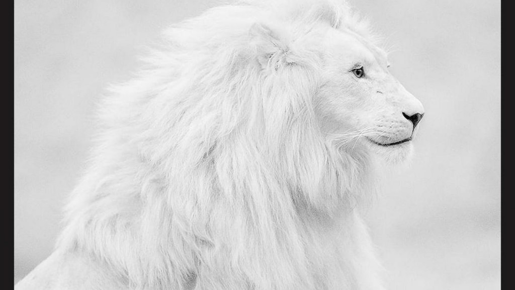 white-wallpaper-hd11-1024x576