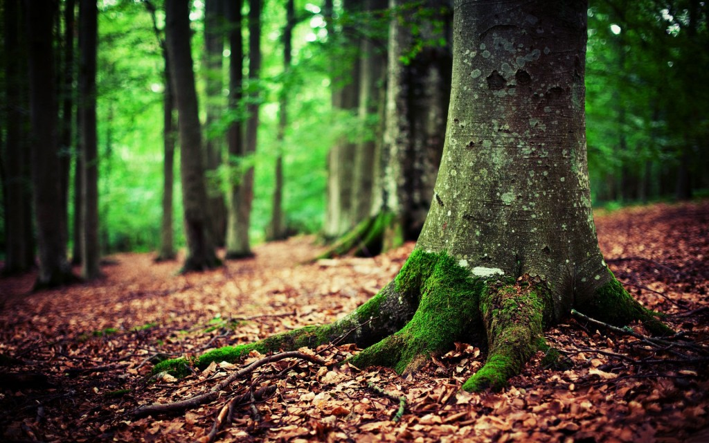 Wald wallpaper7