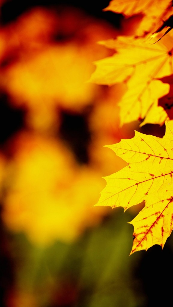 fall iphone wallpaper2