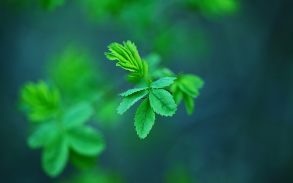 mint-wallpaper9-1024x640