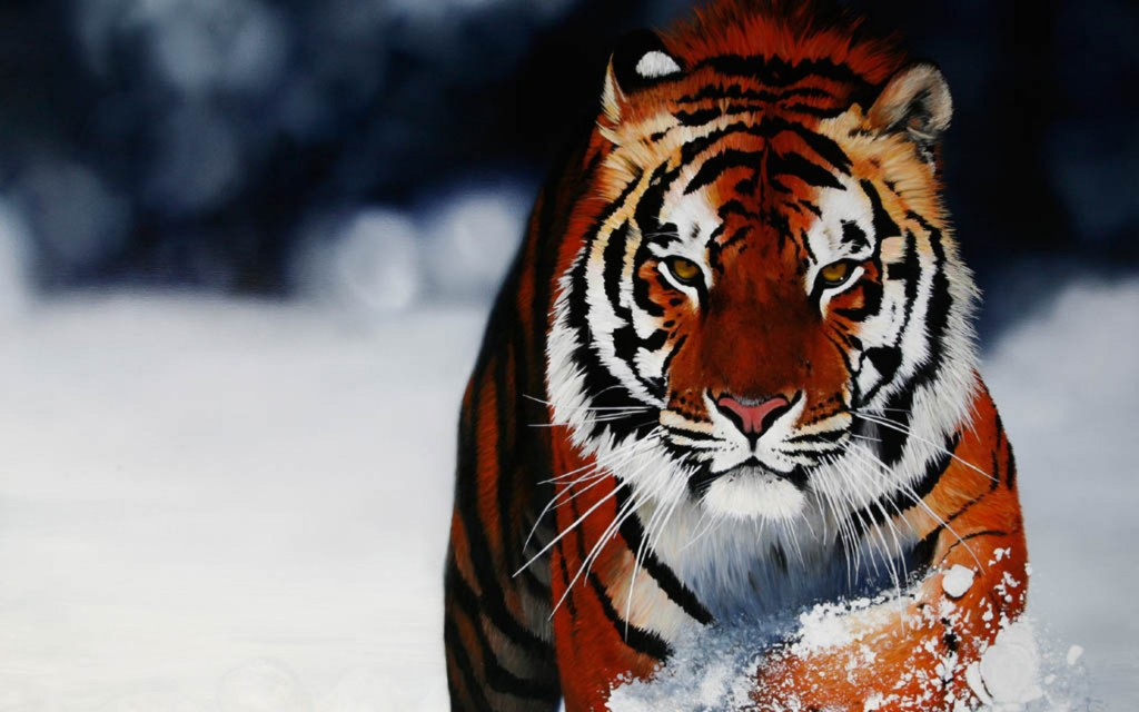 Tiger Wallpapers1