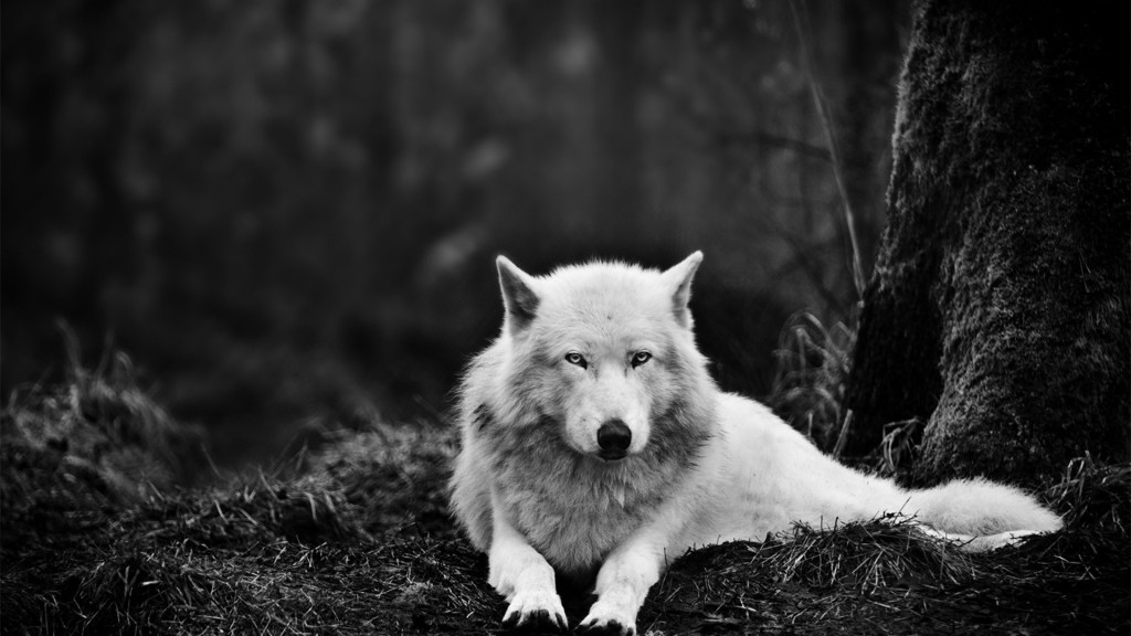 wolf-wallpapers3-1024x576