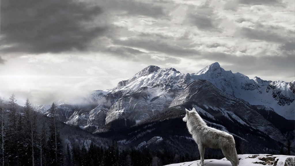 wolf wallpapers7