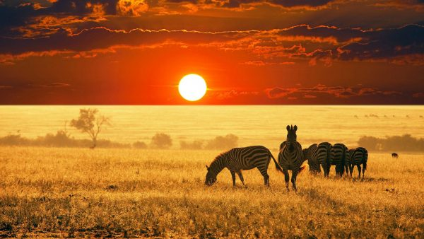 africa wallpaper HD1