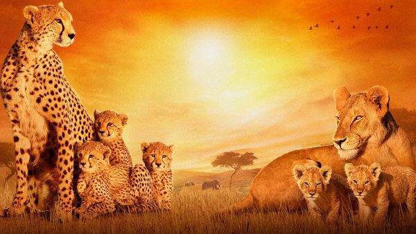 africa wallpaper HD10
