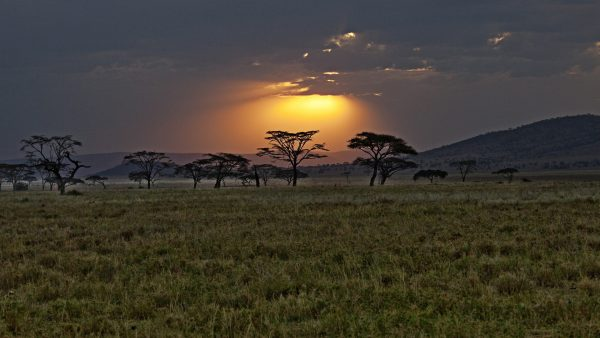 africa wallpaper HD2