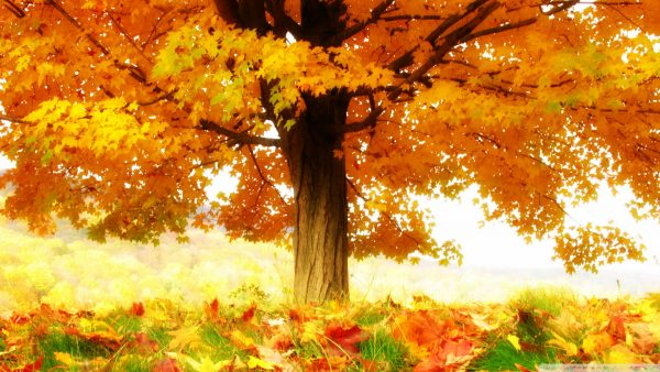 autumn wallpaper hd HD10
