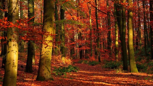 autumn wallpaper hd HD3