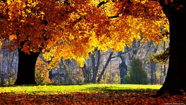 autumn wallpaper hd HD5