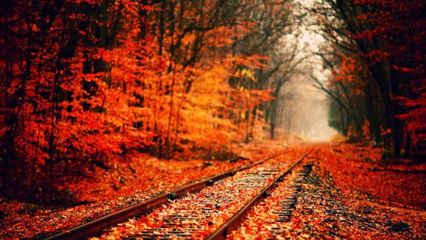 autumn-wallpaper-hd-HD6-600x338