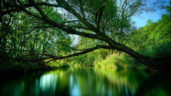 best-nature-wallpapers-HD7-600x338
