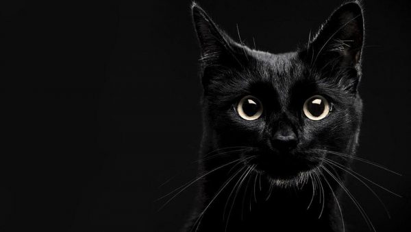 black cat wallpaper HD10