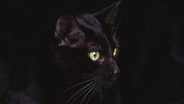 black cat wallpaper HD5