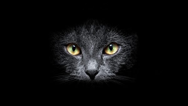 black-cat-wallpaper-HD6-600x338