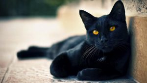 gato preto wallpaper HD