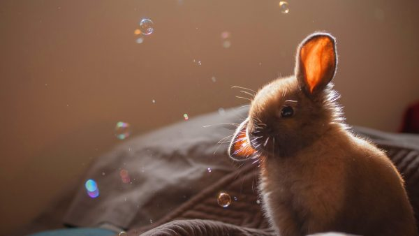 bunny wallpaper HD6