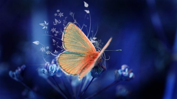 butterflies wallpaper HD5