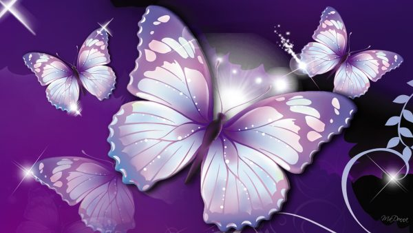 butterflies wallpaper HD6