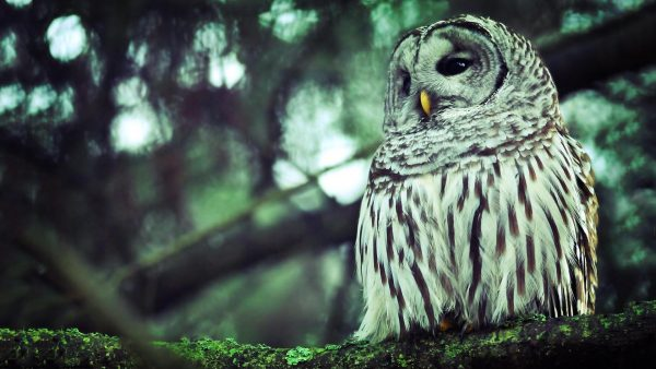 cute-owl-wallpaper-HD9-600x338