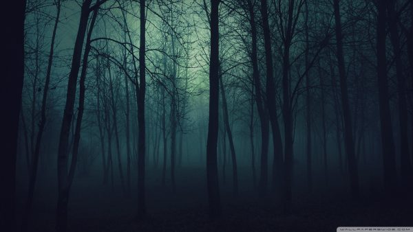 dark forest wallpaper HD1