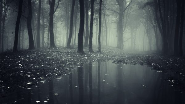 dark forest wallpaper HD10