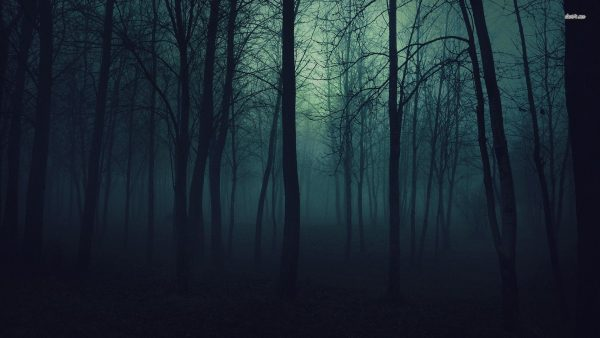 dark forest wallpaper HD2
