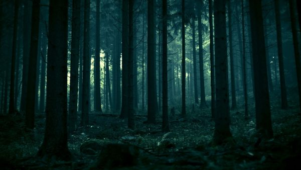 donker bos wallpaper HD3