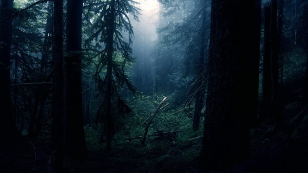 dark forest wallpaper HD4