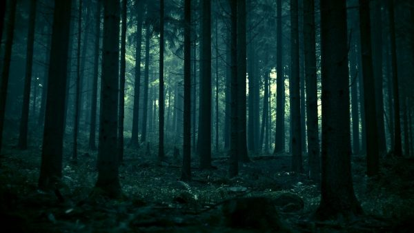 dark forest wallpaper HD7