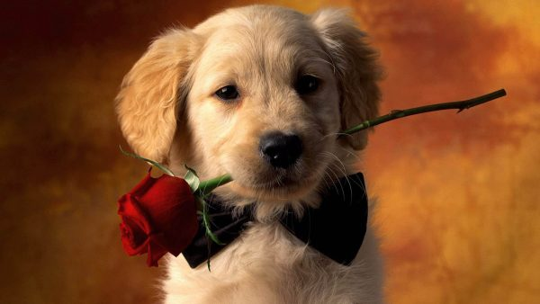 dog wallpapers HD6