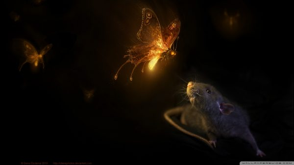 firefly-wallpaper-HD2-600x338