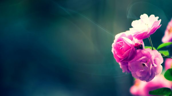 floral wallpapers HD2