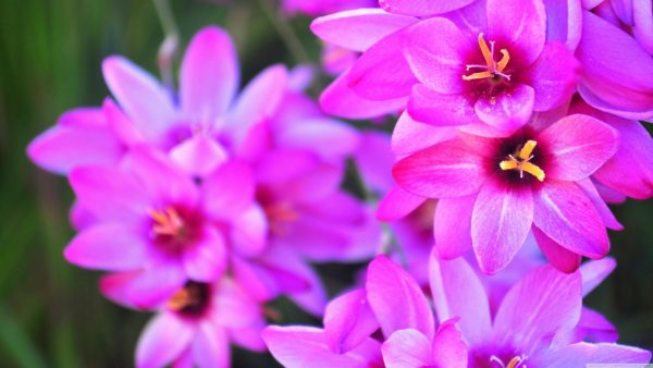 floral wallpapers HD7