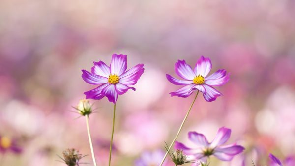 floral wallpapers HD9
