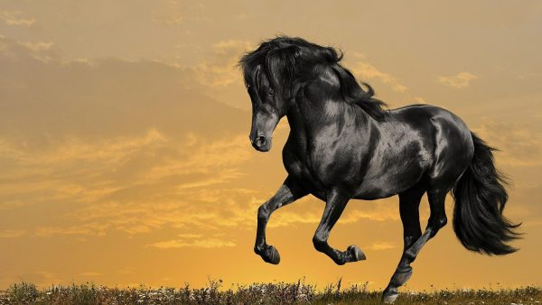 horse-wallpapers-HD3-600x338