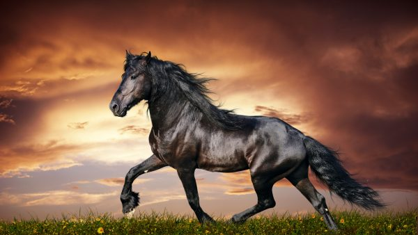 horse-wallpapers-HD5-600x338