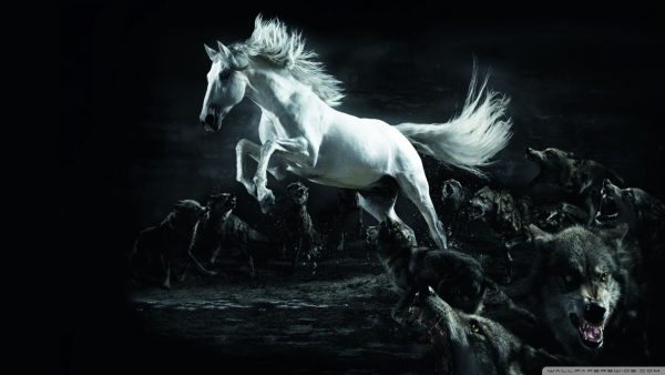 horse-wallpapers-HD7-600x338