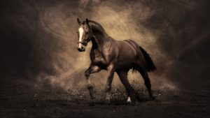paard wallpapers HD