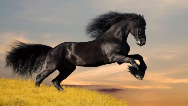 horses wallpaper HD1