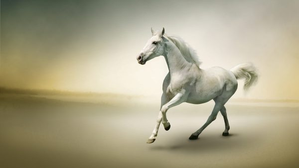horses wallpaper HD3