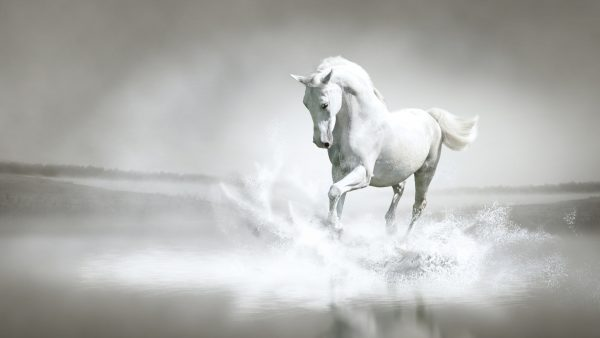 horses wallpaper HD5