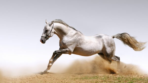 horses wallpaper HD6